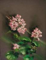 Pelargonium par Marie Hélène Lafolie