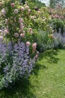 Le parc: allée des roses